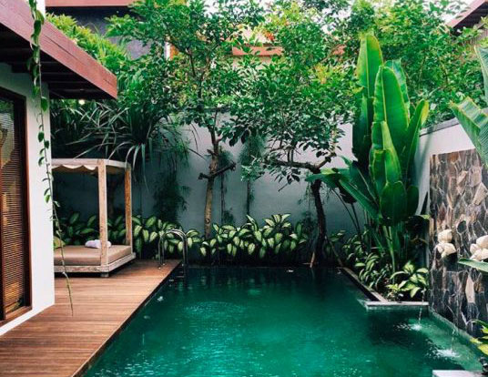 9 Lushes Jungle Pools you will Want to try!