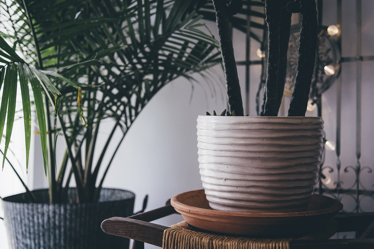 9 Trendy Houseplants That Don't Need Direct Sunlight