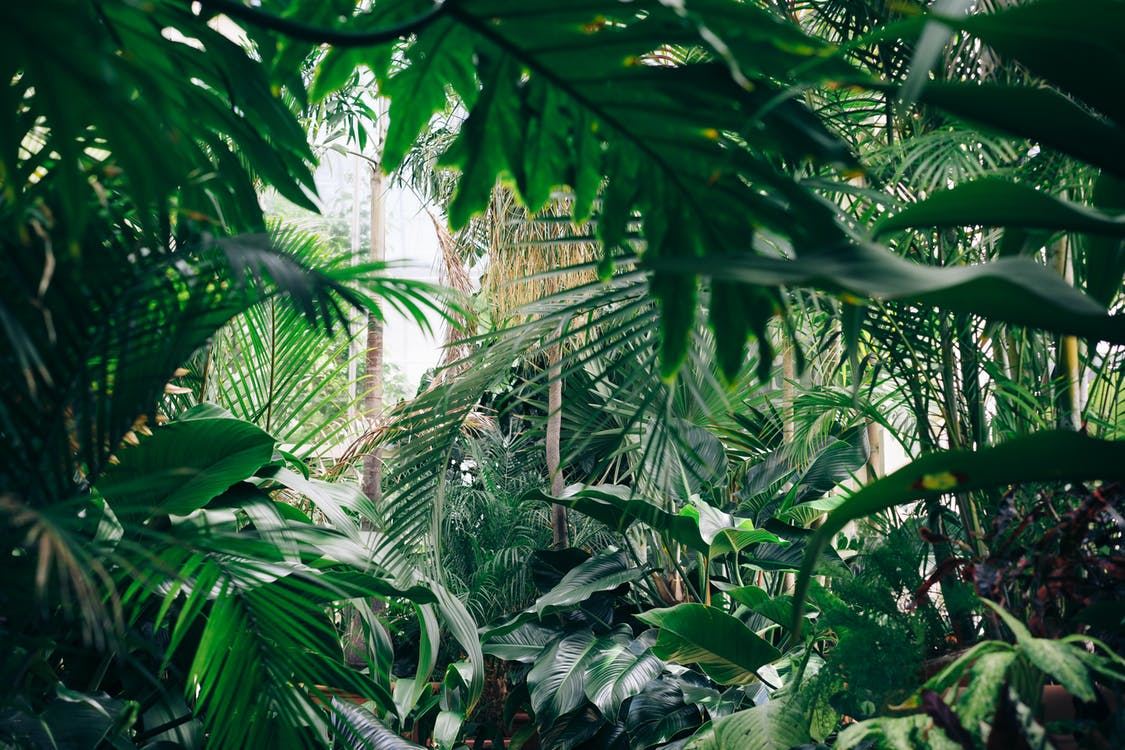 How to create a Jungle Garden
