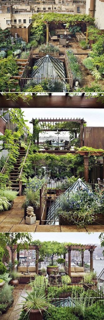 New York Jungle Roof Top