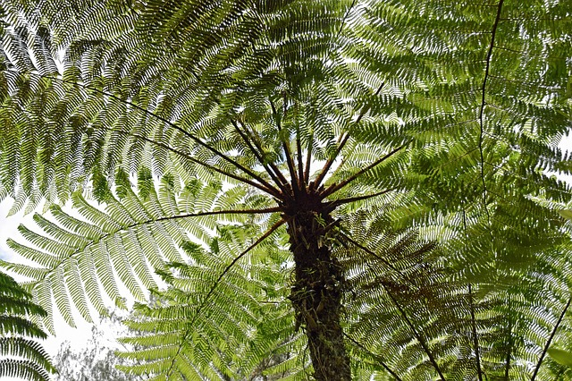 Tree Fern Growing Guide – How To Grow, Plant & Maintain