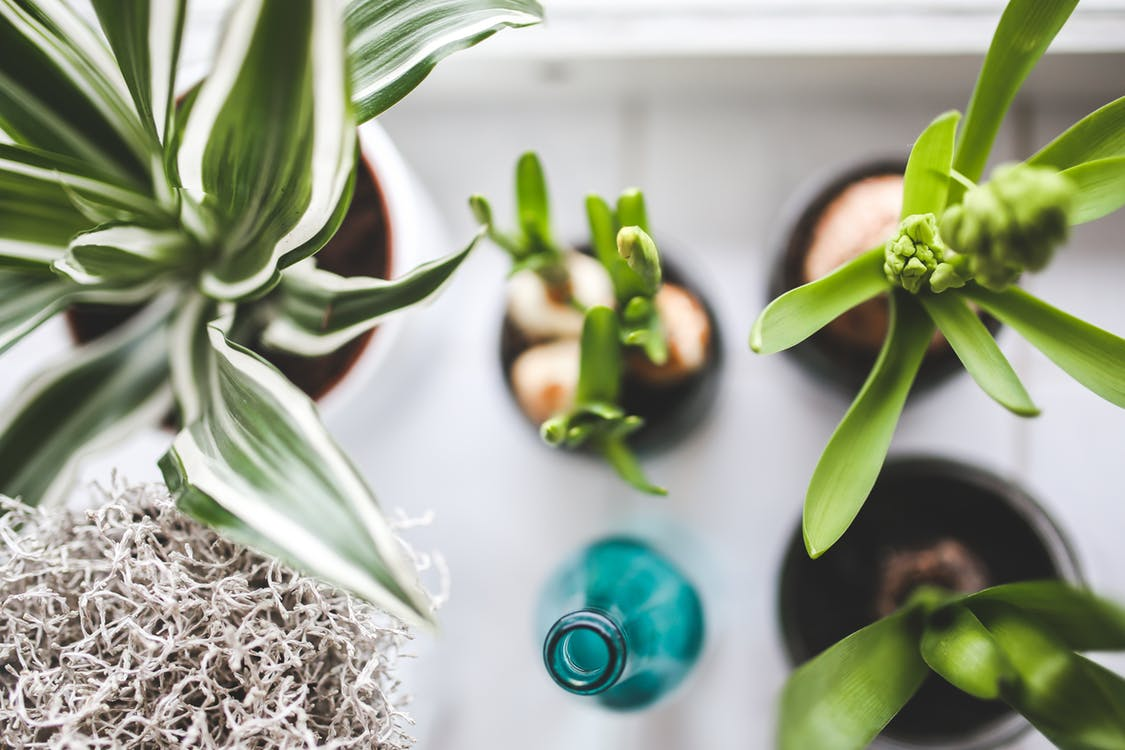 Tropical Indoor Plants for your Home