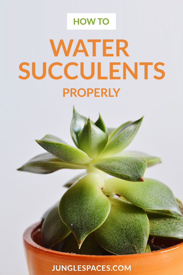 How To Water Succulent Plants Jungle Spaces